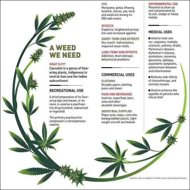 Canna-Biz a weed we need